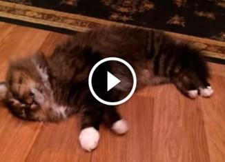Кот бежит во сне
