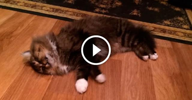 Кот бросался на меня во сне