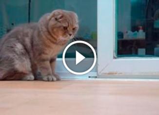 Кот ловит муху