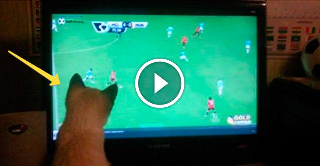 Кот смотрит футбол