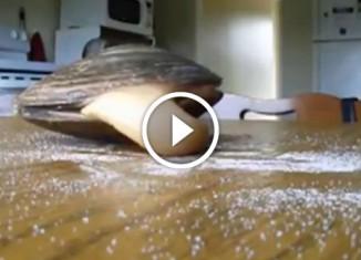 Молюск ест соль