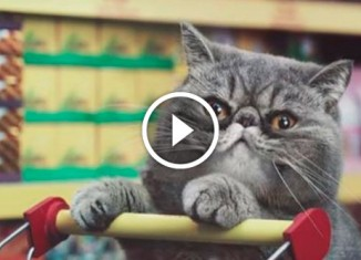 Реклама с котами