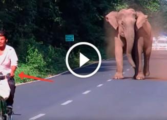 Слон расчищает дорогу