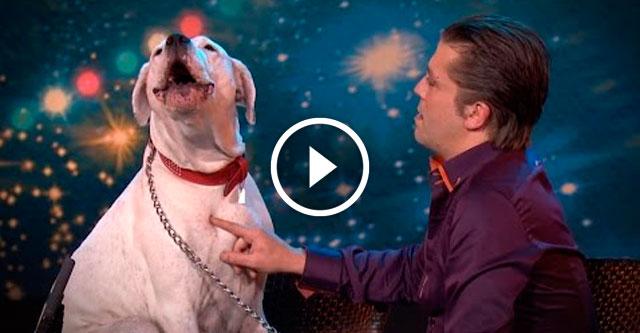 Собака поет под Уитни Хьюстон