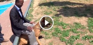 Собака предотвращает ножевую атаку
