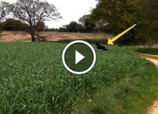Собака прыгает в траве
