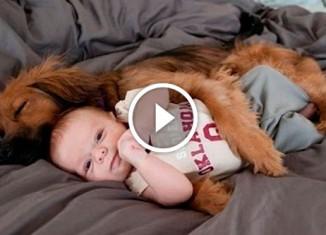 Собаки защищают малышей