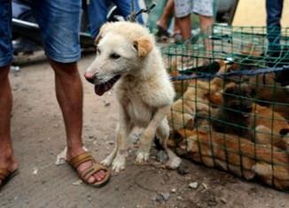 Фестиваль поедания собак