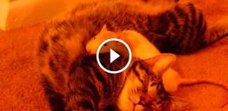Дружба кота и крыс