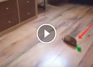 Ежик играет с мячиком