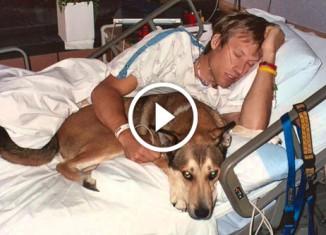 История дружбы Бена и его пса