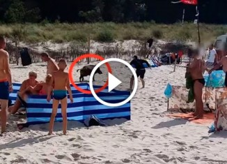 Кабан на пляже