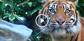 Как животные в зоопарке спасаются в жару
