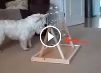 Как занять собаку