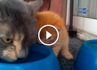 Котенок учится пить