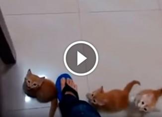 Котята лезут по ноге