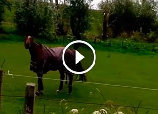 Лошадь балдеет под рок