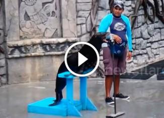 Морской лев поёт под фанеру