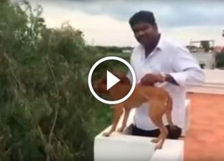 Мужчина выбросил собаку с балкона