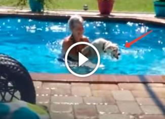 Пес хочет купаться