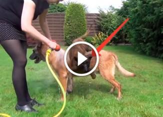 Пес хочет принимать душ
