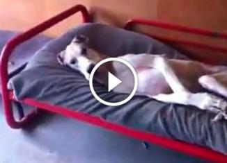 Собака не хочет вставать с кровати