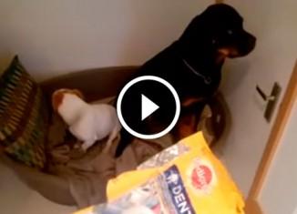 Собаки съели лакомство