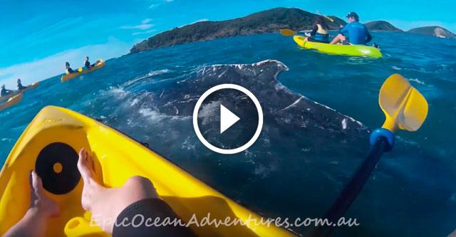 Спасение кита