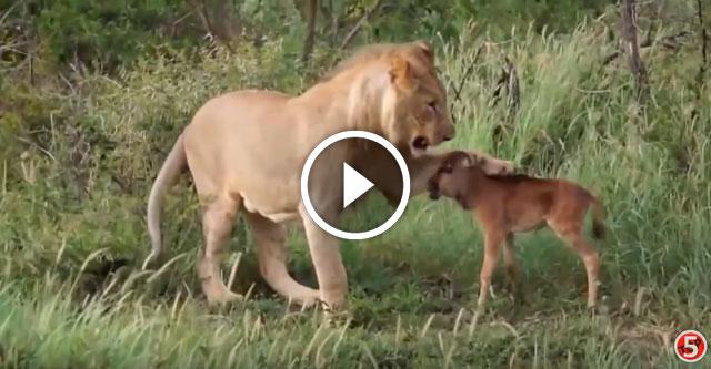 Животные помогают животным
