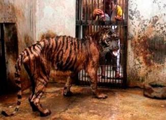 Зоопарк смерти