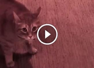 Кот злится на гостя