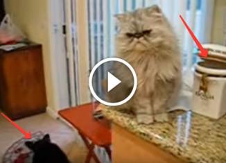 Кот кормит собаку печеньками