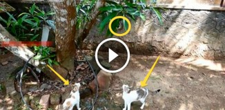 Мышь убегает от котов