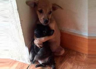 Обнимающиеся щенки