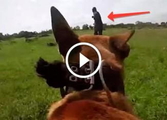 Пес ловит браконьеров