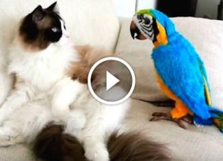 Попугаи против котов