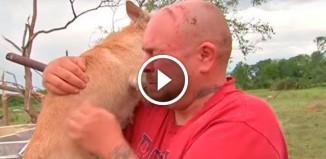Пёс выжил во время торнадо