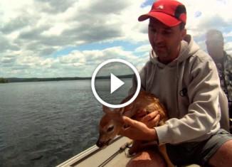 Рыбаки спасли олененка