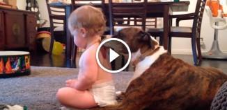 Собака вылизывает малыша