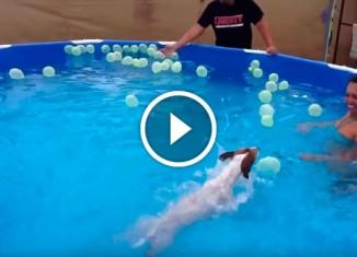 Собака против шариков