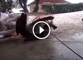 Спасатели ловят собаку