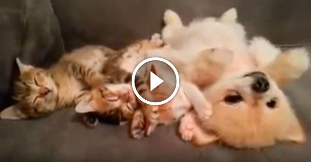 Щенок не хочет разбудить котят
